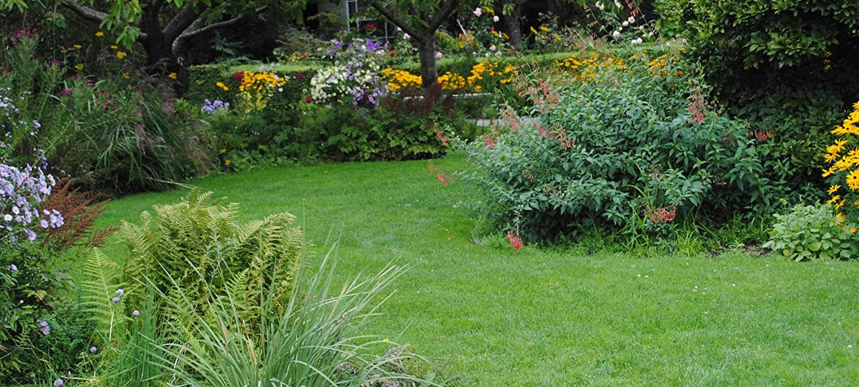 Amazon Com Spring Hill Nurseries Home Page
